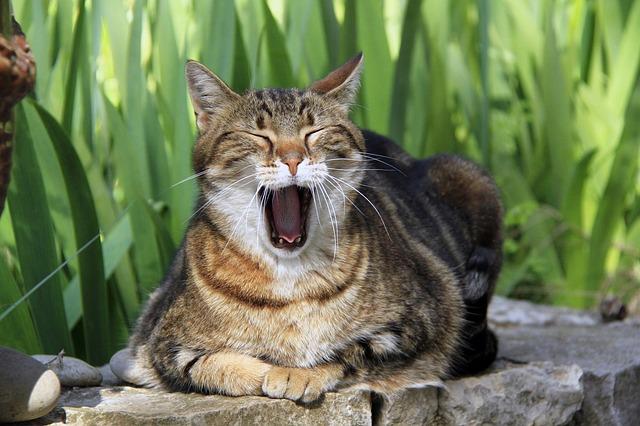 cat-1846377_640